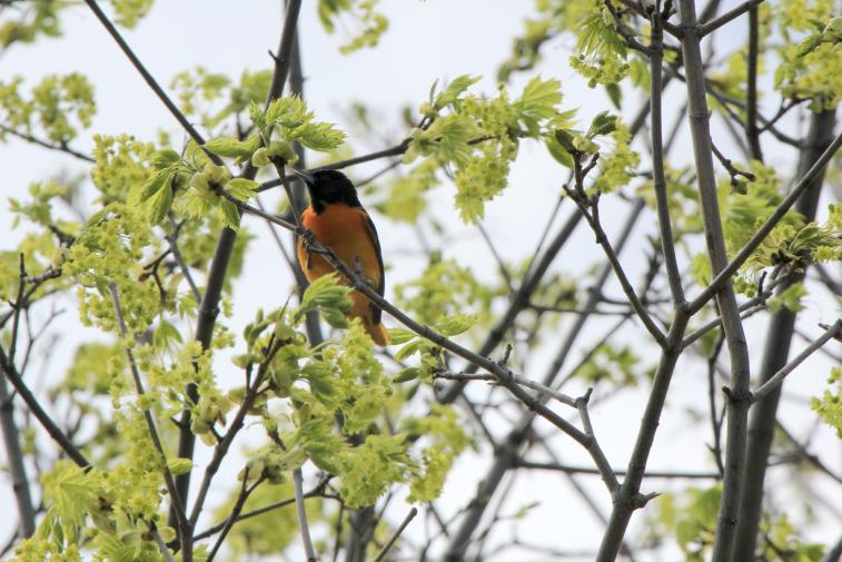 50 Essential Outdoor Spring Activities