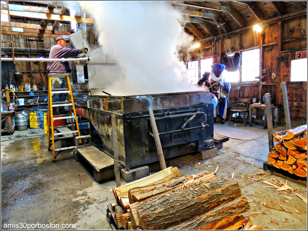 Maple Sugar Season en Massachusetts: Gould´s Sugar-House