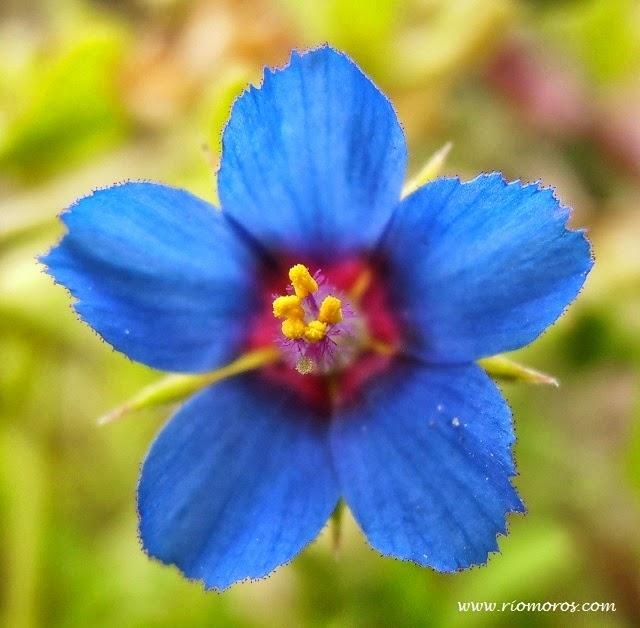 Tiempo de primavera, tiempo de flores