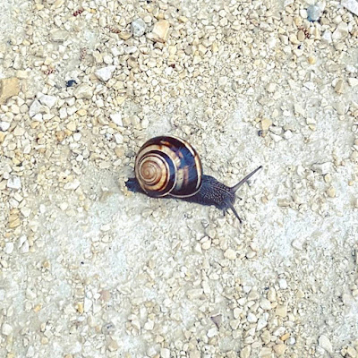 Provence Printemps Escargot Snail Pensées positives Count your Blessings Enjoy The Little Things Spring