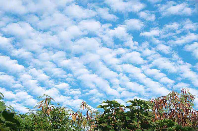 Altocumulus clouds above vegetation