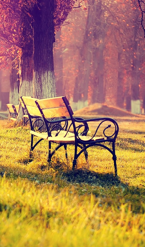 Android Best Wallpapers Autumn Park Landscape Wooden Bench