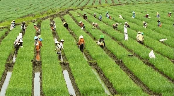 Tips Dan Trik Dalam Berbisnis, Bidang Budidaya Pertanian
