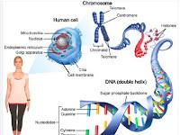 Soal tugas Biologi pengertian Kromosom tingkat SMA sederajat tahun 2018