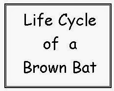 LMN Tree: All About Bats: Free Resources, Books, and