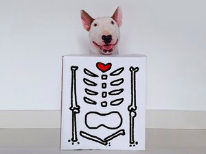 Cachorro carismático vira hit na internet