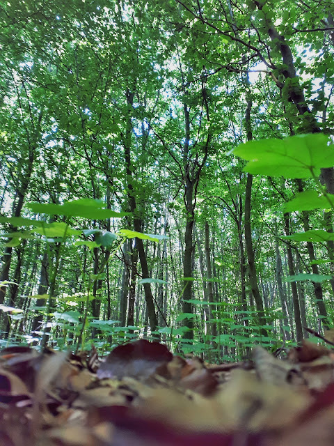 Gnome view of Nationalpark Eifel forest