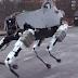 """ماذا تعرف عن روبوت """" spot """" من جوجل ؟"""