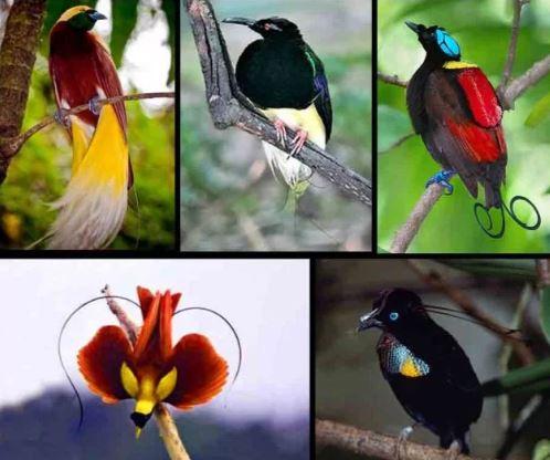 Daftar Harga Burung Lengkap di Pasaran