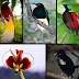 Daftar Harga Burung Lengkap di Pasaran Mei 2018