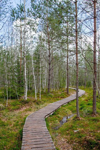 Rundweg im Säumermoor - Soumarské rašeliniště | Wandern im tschechischen Böhmerwald | Nationalpark Sumava | Soumarský Most | Wandern Šumava 04