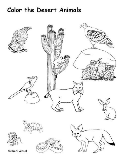 Животные раскраски Animals coloring pages