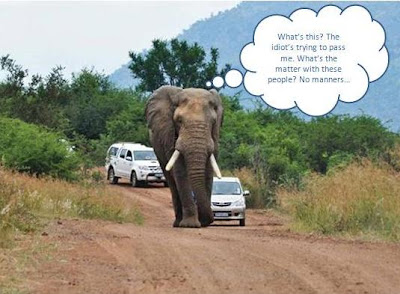 African-Elephant-Rolled-Volkswagen-With-Captions-1
