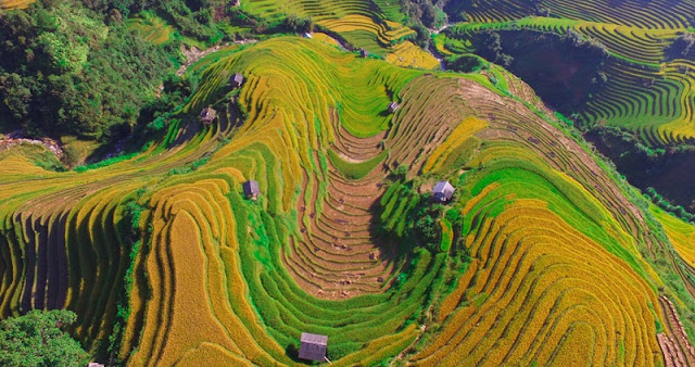 5 Great Homestay For 'Hunting' Ripe Rice In Mu Cang Chai