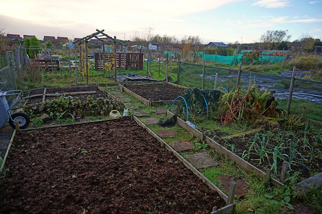 the allotment when we arrived - Carrie Gault 2018