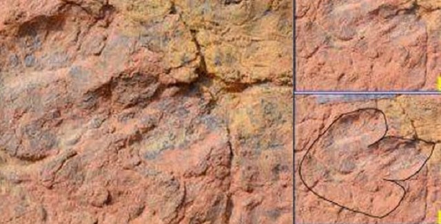 150-million-year-old dinosaur footprints found in India