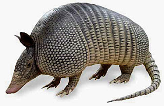 Armadillos Facts