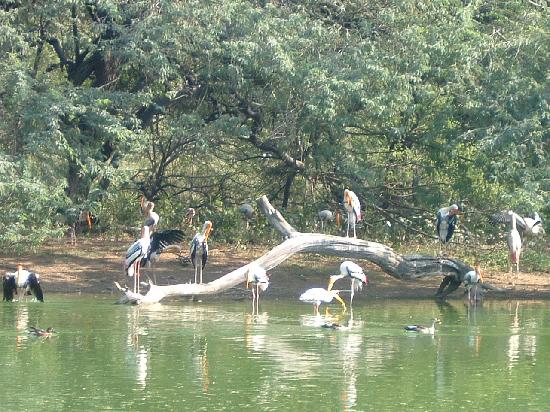 Places To Visit In Delhi National Zoological Park