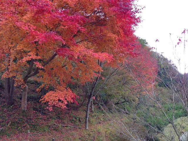 イメージ画像:紅葉