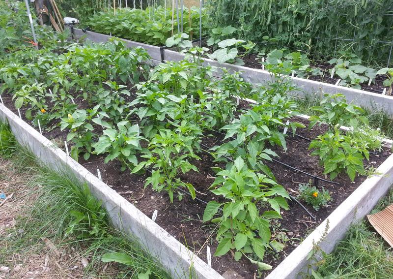 The Gardening Me: Garden Update - Area #2