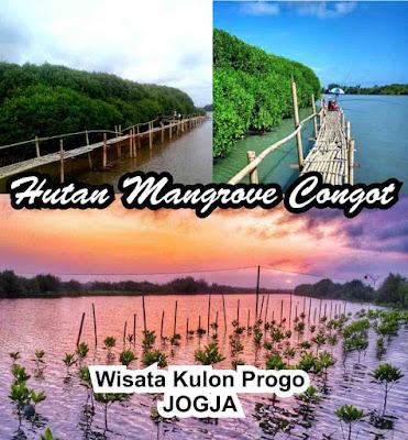 Wisata Alam Hutan Mangrove di Congot