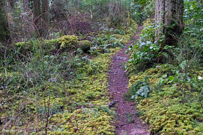 Forest Grove Step Moss