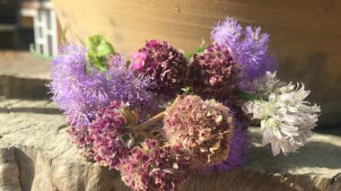 Verano en flor