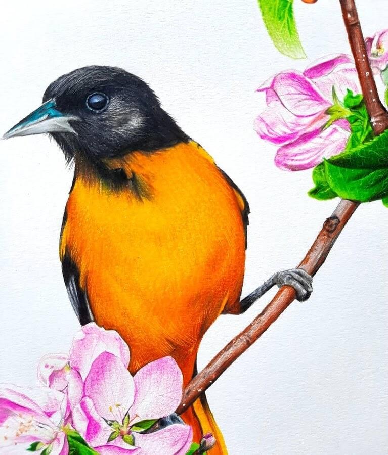 08-Bele-Birds-Drawings-www-designstack-co