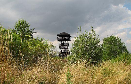Wieża widokowa na Koziej Górze.