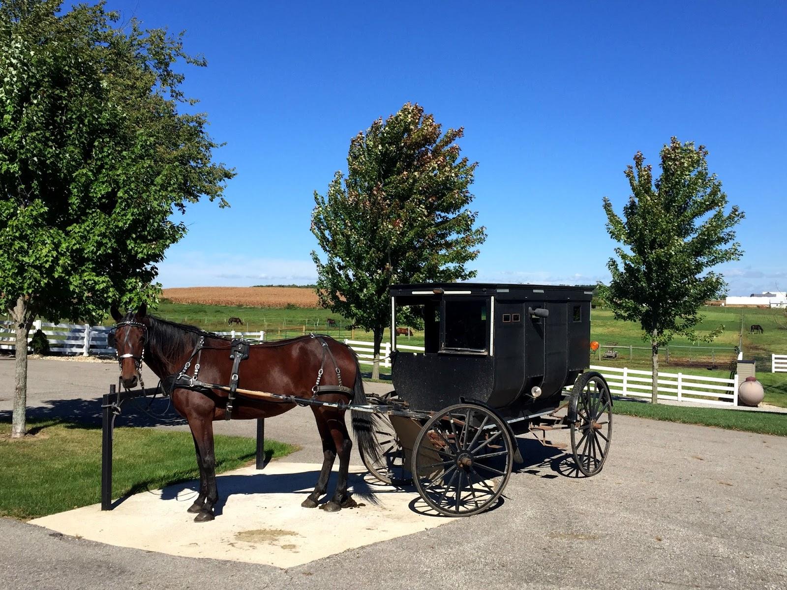 Amish Me Shops Near
