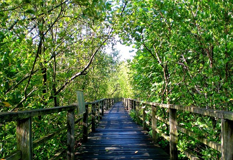 Kota Kinabalu Wetlands Sabah