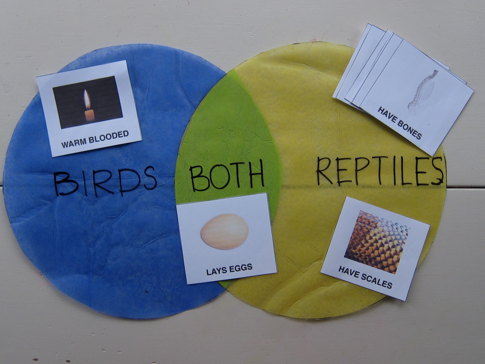 bird reptile venn diagram skills practiced classification scientific knowledge comparing i have made the cards pdf available here [ 1600 x 1200 Pixel ]