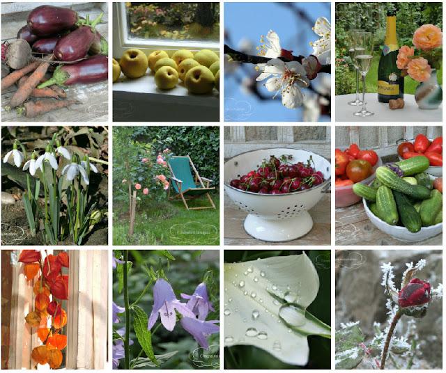 сад, огород, розы, урожай