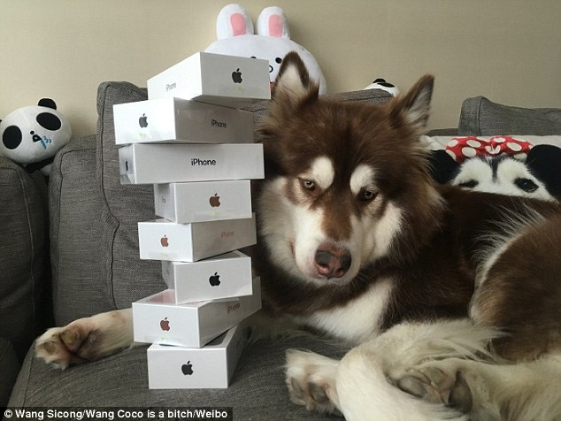 Photo of dog with 8 iPhone 7s