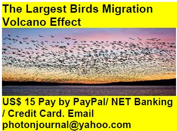 The Largest Birds Migration  Volcano Effect bird story book