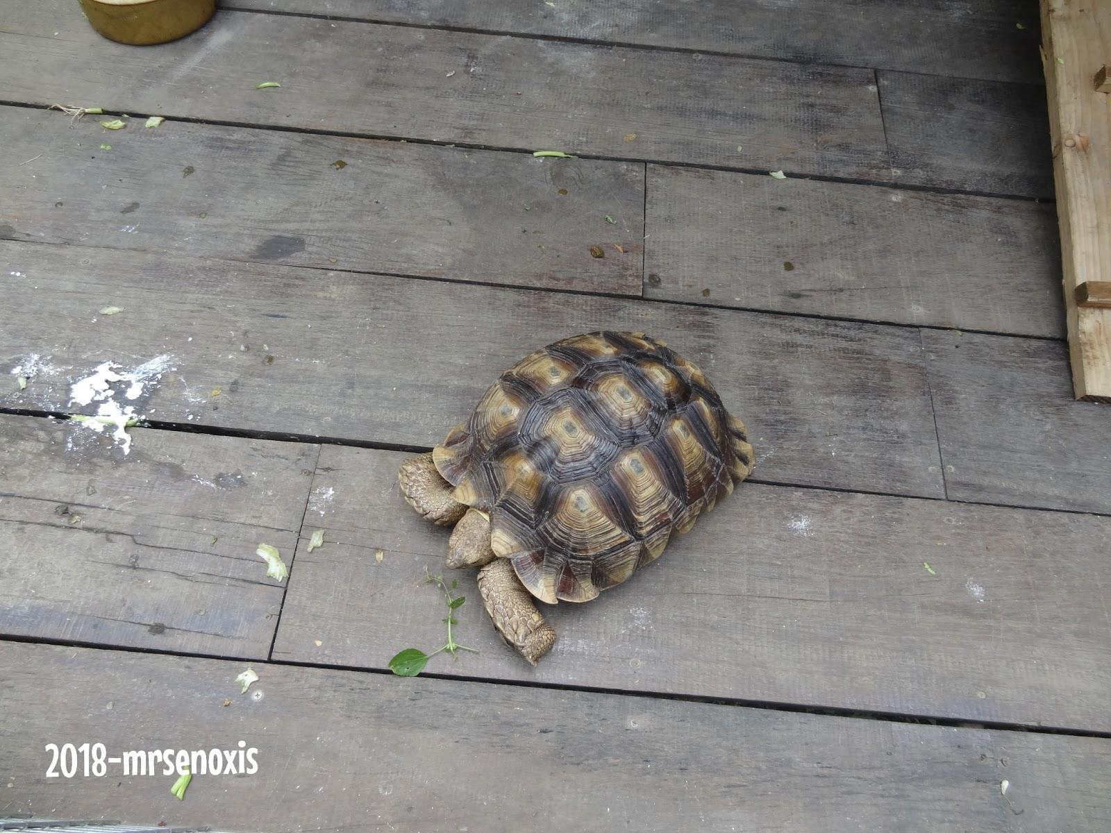 Me As Mrsenoxis Weekend Activity G2g Animal Garden