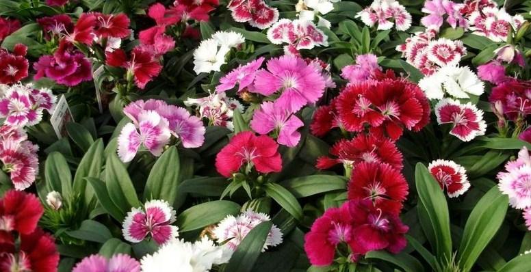 Plants for Alkaline Soils
