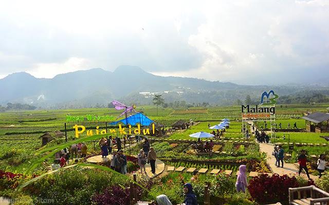 Pemandangan hamparan sawah di Kafe Sawah Pujon Kidul, Malang