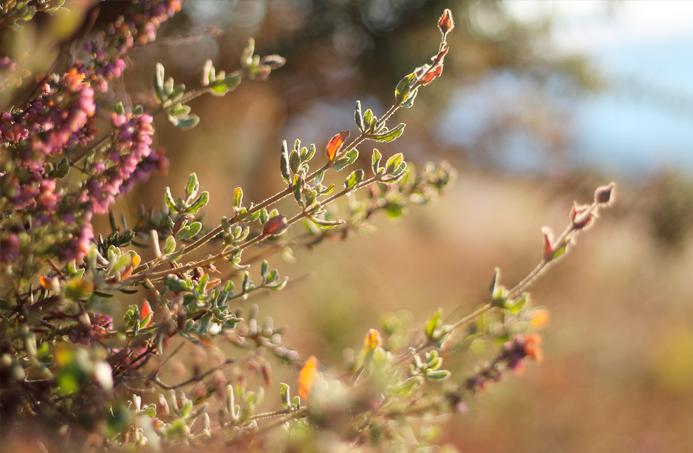 album flores fotografía macro