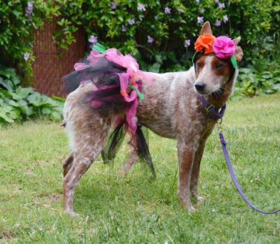Petco Bootique Frida's Assistant dog costume