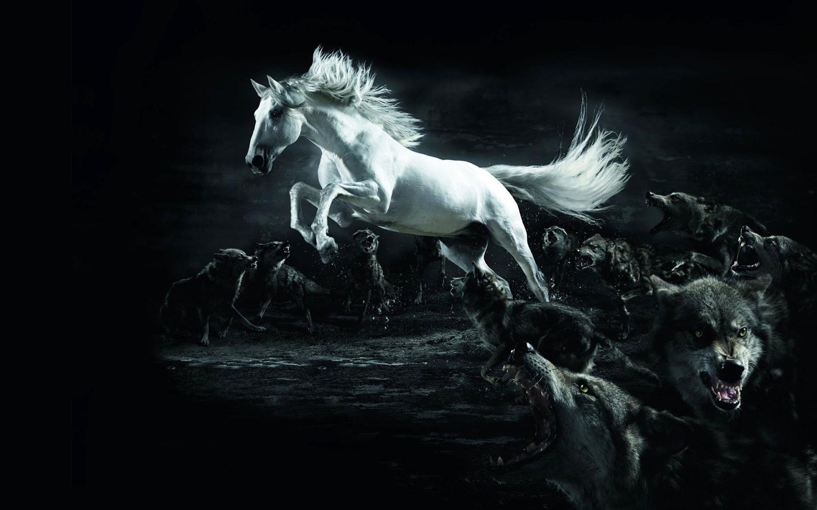 Mebeowall horse 3d desktop high quality wallpapers - High quality 3d wallpapers for pc ...