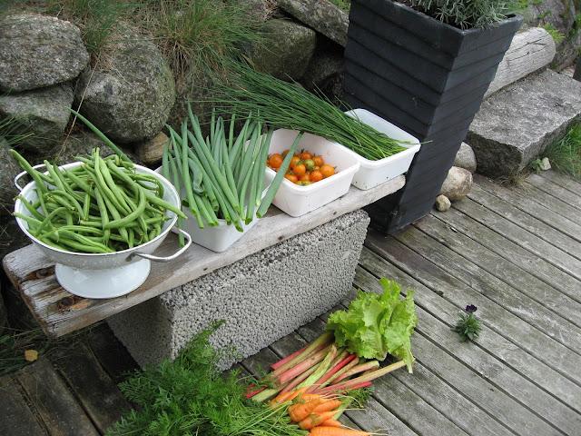 Økologiske grønnsaker er høstet