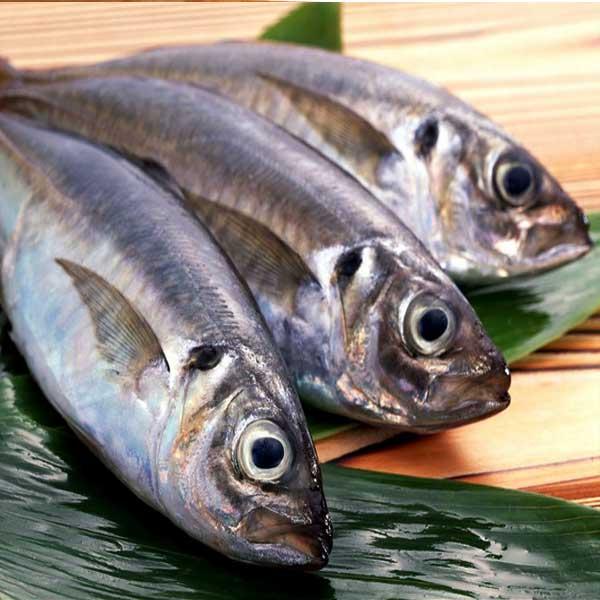 Bahaya-Ikan-Tongkol