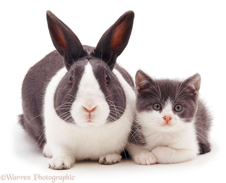 Adorables sesión de fotos de hermanos mascotas de diferentes madres