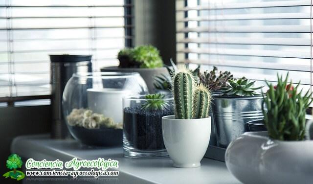 cactus en interiores