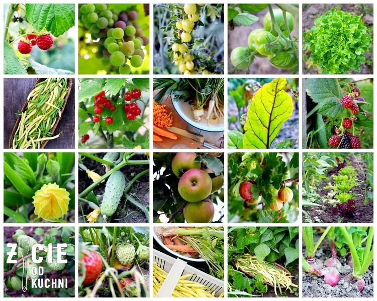 sezonowe przepisy, lipiec, lipiec wkuchni, warzywa sezonowe lipiec, lipiec owoce sezonowe lipiec, lipiec warzywa sezonwe, sezonowa kuchnia, sezonowosc, zycie od kuchni, lipiec zestawienie przepisow