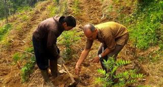 menghitung  kapasitas tampung lahan hijauan makan Ternak (HMT)
