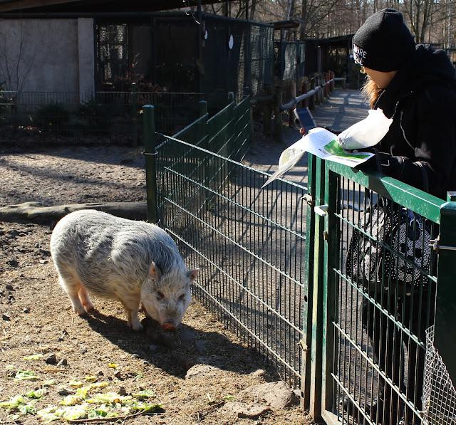 Wildgehege-Moritzburg-Schweineliebe