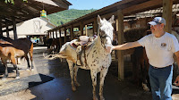 Horseback riding in the Smokies
