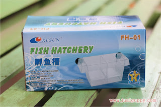 Jual Resun Fish Hatcery,  Harga Resun Fish Hatcery,  Toko Resun Fish Hatcery,  Diskon Resun Fish Hatcery,  Beli Resun Fish Hatcery,  Review Resun Fish Hatcery,  Promo Resun Fish Hatcery,  Spesifikasi Resun Fish Hatcery,  Resun Fish Hatcery Murah,  Resun Fish Hatcery Asli,  Resun Fish Hatcery Original,  Resun Fish Hatcery Jakarta,  Jenis Resun Fish Hatcery,  Budidaya Resun Fish Hatcery,  Peternak Resun Fish Hatcery,  Cara Merawat Resun Fish Hatcery,  Tips Merawat Resun Fish Hatcery,  Bagaimana cara merawat Resun Fish Hatcery,  Bagaimana mengobati Resun Fish Hatcery,  Ciri-Ciri Hamil Resun Fish Hatcery,  Kandang Resun Fish Hatcery,  Ternak Resun Fish Hatcery,  Makanan Resun Fish Hatcery,  guppy breeding Resun Fish Hatcery,  guppies for sale Resun Fish Hatcery,  guppy care Resun Fish Hatcery,  breeding guppies Resun Fish Hatcery,  male guppies Resun Fish Hatcery,  female guppies Resun Fish Hatcery,  guppy aquarium Resun Fish Hatcery,  baby guppies Resun Fish Hatcery,  poecilia reticulata Resun Fish Hatcery,  guppy tank Resun Fish Hatcery,  guppy fry Resun Fish Hatcery,  guppy giving birth Resun Fish Hatcery,  how long do guppies live Resun Fish Hatcery,  guppys Resun Fish Hatcery,  guppy guppy Resun Fish Hatcery,  guppy food Resun Fish Hatcery,  guppy breeding tank Resun Fish Hatcery,  fantail guppy Resun Fish Hatcery,  guppy breeds Resun Fish Hatcery,  guppy s Resun Fish Hatcery,  wild guppies Resun Fish Hatcery,  guppy babies Resun Fish Hatcery,  guppy varieties Resun Fish Hatcery,  freshwater guppies Resun Fish Hatcery,  guppy female Resun Fish Hatcery,  tropical guppies Resun Fish Hatcery,  female guppies for sale Resun Fish Hatcery,  guppy price Resun Fish Hatcery,  raising guppies Resun Fish Hatcery,  guppies for sale online Resun Fish Hatcery,  guppy info Resun Fish Hatcery,  buy guppies online Resun Fish Hatcery,  guppy sale Resun Fish Hatcery,  buy guppies Resun Fish Hatcery,  guppy diseases Resun Fish Hatcery,  guppies online Resun Fish Hatcery,  caring for guppies Resun Fish Hatcery,  best food for guppies Resun Fish Hatcery,  food for guppies Resun Fish Hatcery,  blue guppy Resun Fish Hatcery,  guppy breeding setup Resun Fish Hatcery,  guppy birth Resun Fish Hatcery,  guppy species Resun Fish Hatcery,  gestation period for guppies Resun Fish Hatcery,  guppys online Resun Fish Hatcery,  guppy care sheet Resun Fish Hatcery,  guppy blue Resun Fish Hatcery,  keeping guppies Resun Fish Hatcery,  guppies for sale cheap Resun Fish Hatcery,  the guppy Resun Fish Hatcery,  guppy breeding cycle Resun Fish Hatcery,  show guppies Resun Fish Hatcery,  thai guppy Resun Fish Hatcery,  male and female guppies Resun Fish Hatcery,  what to feed baby guppies Resun Fish Hatcery,  yellow guppy Resun Fish Hatcery,  guppy names Resun Fish Hatcery,  guppy gestation period Resun Fish Hatcery,  feeding guppies Resun Fish Hatcery,  guppy genetics Resun Fish Hatcery,  guppy show Resun Fish Hatcery,  turquoise guppy Resun Fish Hatcery,  guppy fry care Resun Fish Hatcery,  guppy games Resun Fish Hatcery,  guppy gestation Resun Fish Hatcery,  guppy colors Resun Fish Hatcery,  guppy tank setup Resun Fish Hatcery,  trinidadian guppies Resun Fish Hatcery,  guppies having babies Resun Fish Hatcery,  guppy strains Resun Fish Hatcery,  what do guppies eat Resun Fish Hatcery,  what to feed guppies Resun Fish Hatcery,  guppy life span Resun Fish Hatcery,  how to care for guppies Resun Fish Hatcery,  guppy male and female Resun Fish Hatcery,  what is a guppy Resun Fish Hatcery,  guppy natural habitat Resun Fish Hatcery,  german guppy Resun Fish Hatcery,  guppy poecilia reticulata Resun Fish Hatcery,  guppy images Resun Fish Hatcery,  images of guppies Resun Fish Hatcery,  fishguppy Resun Fish Hatcery,  guppy facts Resun Fish Hatcery,  how many babies do guppies have Resun Fish Hatcery,  how big do guppies get Resun Fish Hatcery,  how to take care of guppies Resun Fish Hatcery,  fan tailed guppies Resun Fish Hatcery,  guppy pregnant Resun Fish Hatcery,  guppy life cycle Resun Fish Hatcery,  temperature for guppies Resun Fish Hatcery,  what are guppies Resun Fish Hatcery,  guppies restaurant Resun Fish Hatcery,  guppy definition Resun Fish Hatcery,  guppy meaning Resun Fish Hatcery,  guppy size Resun Fish Hatcery,  define guppy Resun Fish Hatcery,  guppy wiki Resun Fish Hatcery,  how do guppies give birth Resun Fish Hatcery,  baby guppys Resun Fish Hatcery,  guppies bar Resun Fish Hatcery,  how many fry do guppies have Resun Fish Hatcery,  guppy behavior Resun Fish Hatcery,  how many babies does a guppy have Resun Fish Hatcery,  where do guppies come from Resun Fish Hatcery,  how do guppies reproduce Resun Fish Hatcery,  what does guppy mean Resun Fish Hatcery,  what is guppy Resun Fish Hatcery,  types of guppy Resun Fish Hatcery,  guppy guppies Resun Fish Hatcery,  guppy house hours Resun Fish Hatcery,  guppys on the go Resun Fish Hatcery,  guppys restaurant Resun Fish Hatcery,  guppies definition Resun Fish Hatcery,  do guppies eat their babies Resun Fish Hatcery,  gestation guppy Resun Fish Hatcery,  bubble guppies Resun Fish Hatcery,  guppy Resun Fish Hatcery,  Resun Fish Hatcery Jakarta,  Resun Fish Hatcery Bandung,  Resun Fish Hatcery Medan,  Resun Fish Hatcery Bali,  Resun Fish Hatcery Makassar,  Resun Fish Hatcery Jambi,  Resun Fish Hatcery Pekanbaru,  Resun Fish Hatcery Palembang,  Resun Fish Hatcery Sumatera,  Resun Fish Hatcery Langsa,  Resun Fish Hatcery Lhokseumawe,  Resun Fish Hatcery Meulaboh,  Resun Fish Hatcery Sabang,  Resun Fish Hatcery Subulussalam,  Resun Fish Hatcery Denpasar,  Resun Fish Hatcery Pangkalpinang,  Resun Fish Hatcery Cilegon,  Resun Fish Hatcery Serang,  Resun Fish Hatcery Tangerang Selatan,  Resun Fish Hatcery Tangerang,  Resun Fish Hatcery Bengkulu,  Resun Fish Hatcery Gorontalo,  Resun Fish Hatcery Kota Administrasi Jakarta Barat,  Resun Fish Hatcery Kota Administrasi Jakarta Pusat,  Resun Fish Hatcery Kota Administrasi Jakarta Selatan,  Resun Fish Hatcery Kota Administrasi Jakarta Timur,  Resun Fish Hatcery Kota Administrasi Jakarta Utara,  Resun Fish Hatcery Sungai Penuh,  Resun Fish Hatcery Jambi,  Resun Fish Hatcery Bandung,  Resun Fish Hatcery Bekasi,  Resun Fish Hatcery Bogor,  Resun Fish Hatcery Cimahi,  Resun Fish Hatcery Cirebon,  Resun Fish Hatcery Depok,  Resun Fish Hatcery Sukabumi,  Resun Fish Hatcery Tasikmalaya,  Resun Fish Hatcery Banjar,  Resun Fish Hatcery Magelang,  Resun Fish Hatcery Pekalongan,  Resun Fish Hatcery Purwokerto,  Resun Fish Hatcery Salatiga,  Resun Fish Hatcery Semarang,  Resun Fish Hatcery Surakarta,  Resun Fish Hatcery Tegal,  Resun Fish Hatcery Batu,  Resun Fish Hatcery Blitar,  Resun Fish Hatcery Kediri,  Resun Fish Hatcery Madiun,  Resun Fish Hatcery Malang,  Resun Fish Hatcery Mojokerto,  Resun Fish Hatcery Pasuruan,  Resun Fish Hatcery Probolinggo,  Resun Fish Hatcery Surabaya,  Resun Fish Hatcery Pontianak,  Resun Fish Hatcery Singkawang,  Resun Fish Hatcery Banjarbaru,  Resun Fish Hatcery Banjarmasin,  Resun Fish Hatcery Palangkaraya,  Resun Fish Hatcery Balikpapan,  Resun Fish Hatcery Bontang,  Resun Fish Hatcery Samarinda,  Resun Fish Hatcery Tarakan,  Resun Fish Hatcery Batam,  Resun Fish Hatcery Tanjungpinang,  Resun Fish Hatcery Bandar Lampung,  Resun Fish Hatcery Kotabumi,  Resun Fish Hatcery Liwa,  Resun Fish Hatcery Metro,  Resun Fish Hatcery Ternate,  Resun Fish Hatcery Tidore Kepulauan,  Resun Fish Hatcery Ambon,  Resun Fish Hatcery Tual,  Resun Fish Hatcery Bima,  Resun Fish Hatcery Mataram,  Resun Fish Hatcery Kupang,  Resun Fish Hatcery Sorong,  Resun Fish Hatcery Jayapura,  Resun Fish Hatcery Dumai,  Resun Fish Hatcery Pekanbaru,  Resun Fish Hatcery Makassar,  Resun Fish Hatcery Palopo,  Resun Fish Hatcery Parepare,  Resun Fish Hatcery Palu,  Resun Fish Hatcery Bau-Bau,  Resun Fish Hatcery Kendari,  Resun Fish Hatcery Bitung,  Resun Fish Hatcery Kotamobagu,  Resun Fish Hatcery Manado,  Resun Fish Hatcery Tomohon,  Resun Fish Hatcery Bukittinggi,  Resun Fish Hatcery Padang,  Resun Fish Hatcery Padangpanjang,  Resun Fish Hatcery Pariaman,  Resun Fish Hatcery Payakumbuh,  Resun Fish Hatcery Sawahlunto,  Resun Fish Hatcery Solok,  Resun Fish Hatcery Lubuklinggau,  Resun Fish Hatcery Pagaralam,  Resun Fish Hatcery Palembang,  Resun Fish Hatcery Prabumulih,  Resun Fish Hatcery Binjai,  Resun Fish Hatcery Medan,  Resun Fish Hatcery Padang Sidempuan,  Resun Fish Hatcery Pematangsiantar,  Resun Fish Hatcery Sibolga,  Resun Fish Hatcery Tanjungbalai,  Resun Fish Hatcery Tebingtinggi,  Resun Fish Hatcery Yogyakarta,